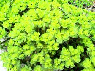 黄色の花。