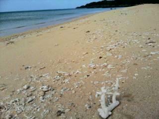 サンゴひろい