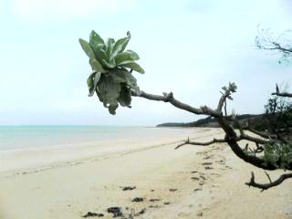 トゥマ〜ル浜
